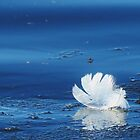 White On Blue  by lorilee