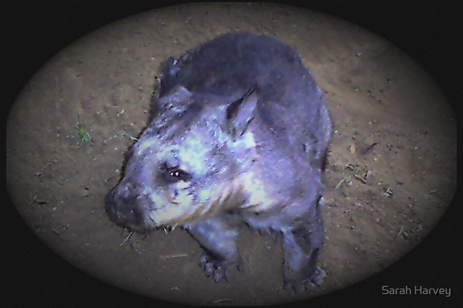 Wombat by Sarah Harvey