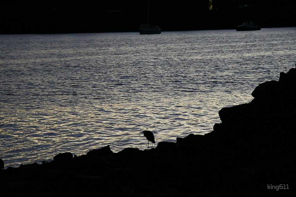 lonely bird by king611