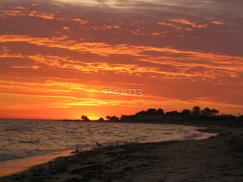 INDENTED HEAD by TULIP73