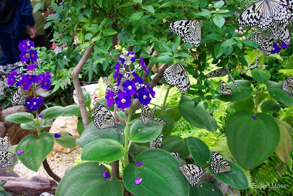 Fluttering Butterflys by Susan Moss