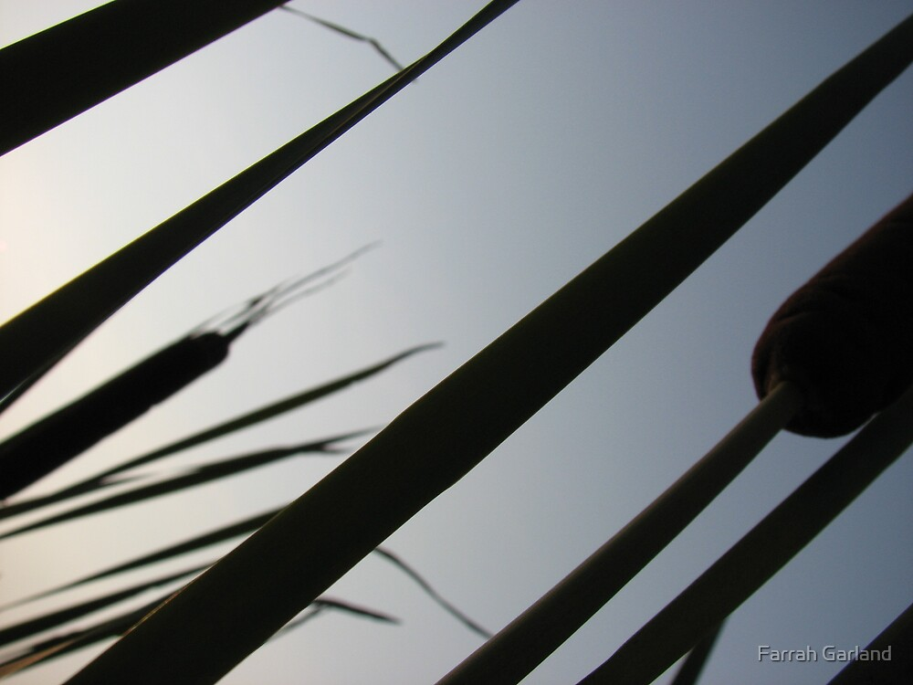 Cattails against the sky by Farrah Garland