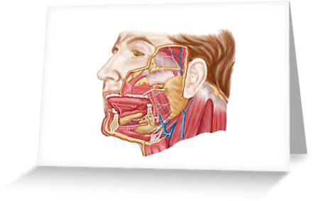 Tarjetas de felicitación «Anatomía de las glándulas salivales ...
