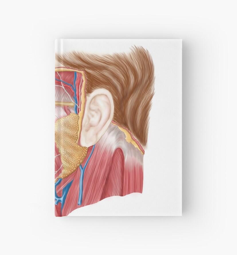 Cuadernos de tapa dura «Anatomía de las glándulas salivales humanas ...