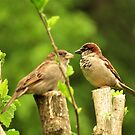House sparrow couple by Ron Russell