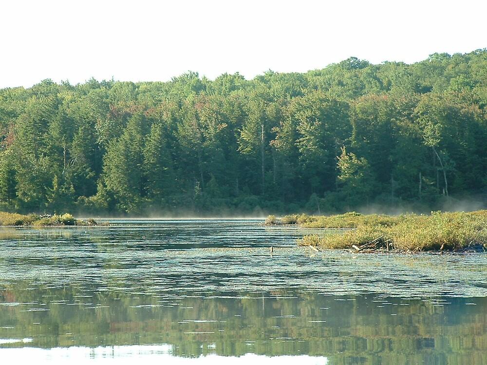 Bog Pond 2 by Brian Burdick