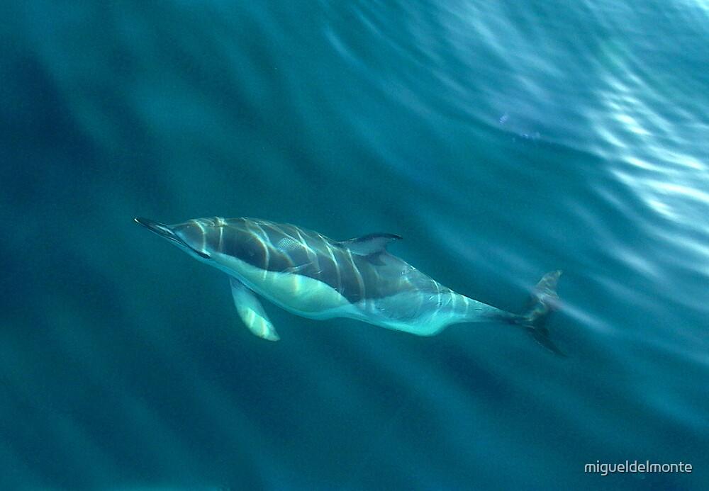 Dolphin mammals  by migueldelmonte