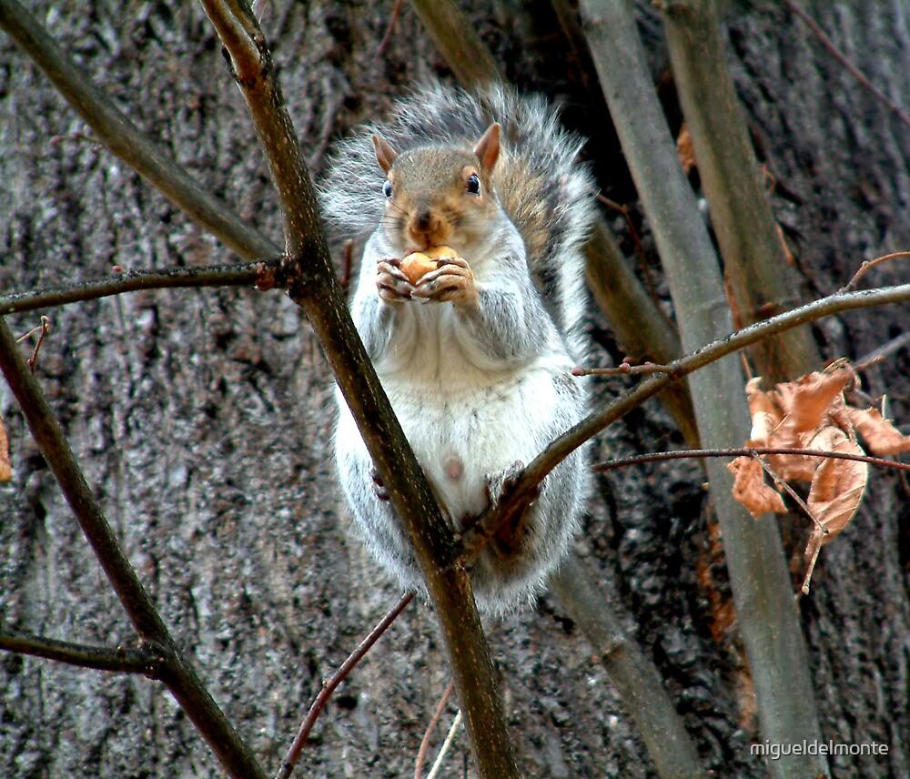Grey Squirrel by migueldelmonte