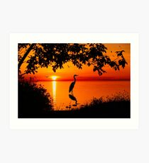 Heron at Sunset  Art Print