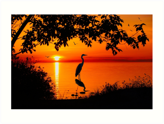 Heron at Sunset  by Megan Noble
