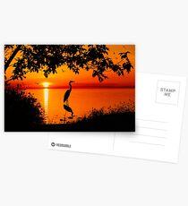 Heron at Sunset  Postcards