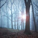 The Light of the Forest by Ursula Rodgers Photography