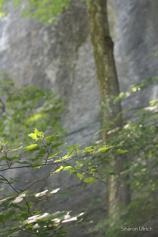 Limestone Cliffs by Sharon Ulrich