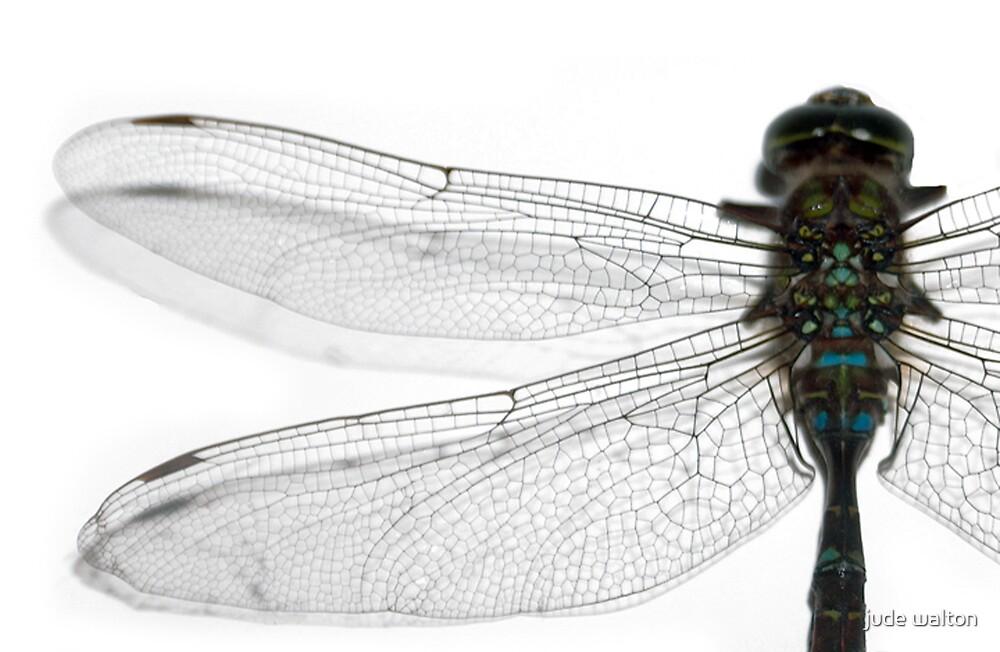 Dragonfly by jude walton