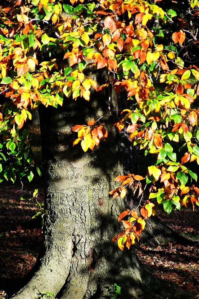 Tree by Kerri Kenel