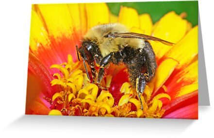 Bumble Bee(2) by robkal