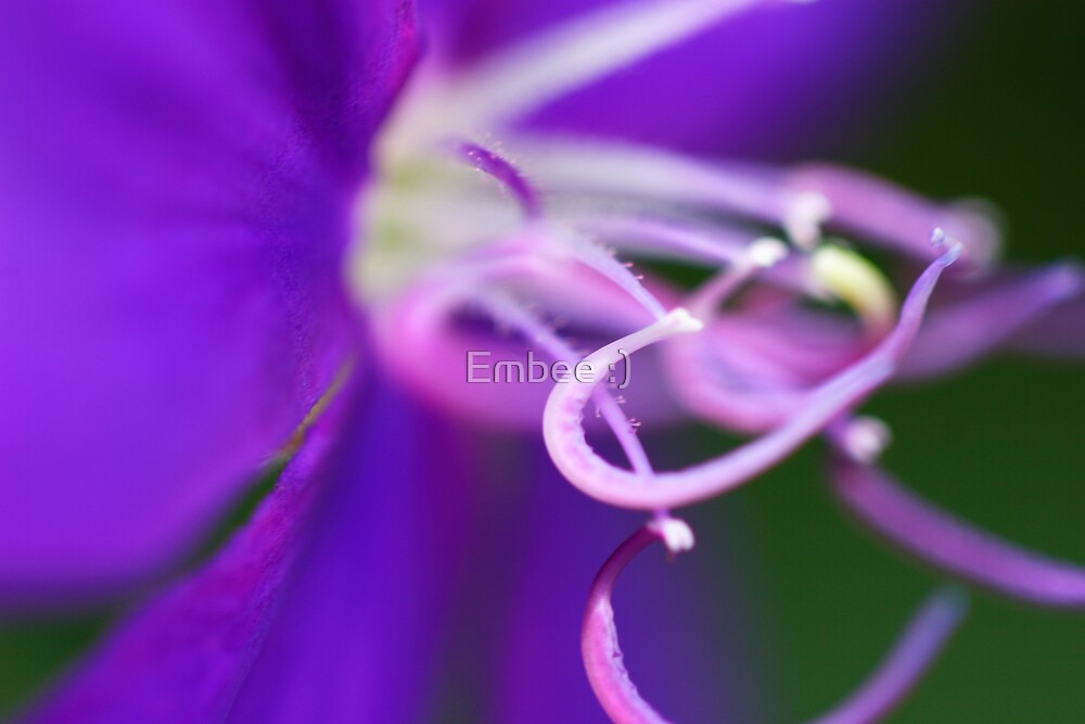 Purple passion by momleeb