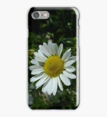 Sea mayweed iPhone Case/Skin