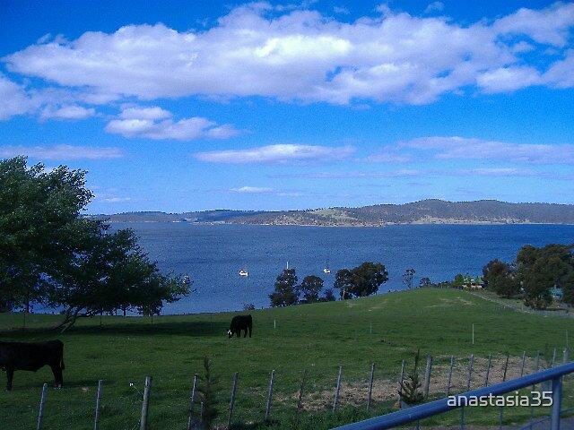sheeps milk farm tasmania by anastasia35