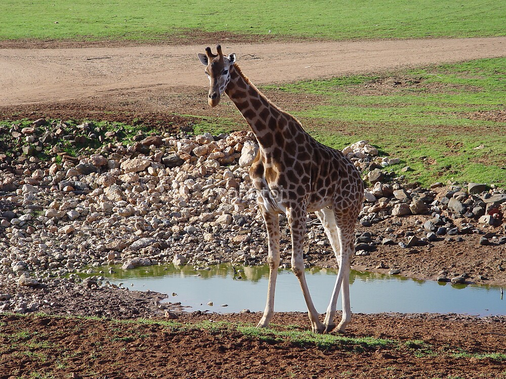 photoj animal S.A. Minarto Zoo by photoj