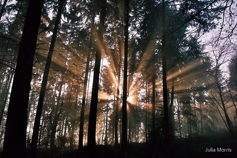 Serenity by Julia Morris