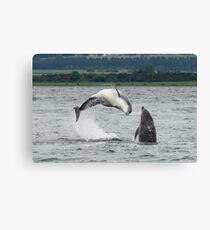 Moray Firth Dolphins - Double Breach Canvas Print
