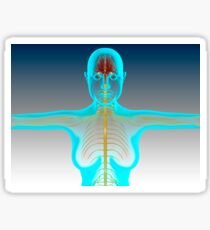 Conceptual image of female nervous system with brain. Sticker
