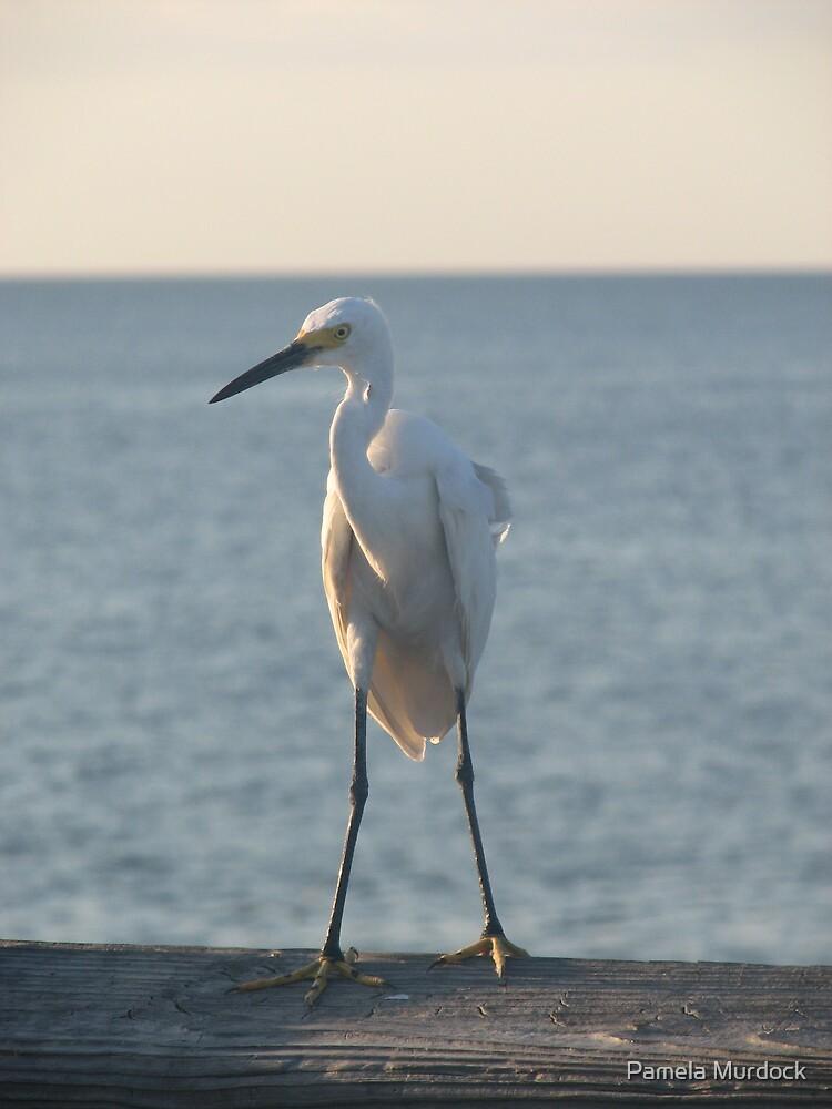 Pier Bird by Pamela Murdock