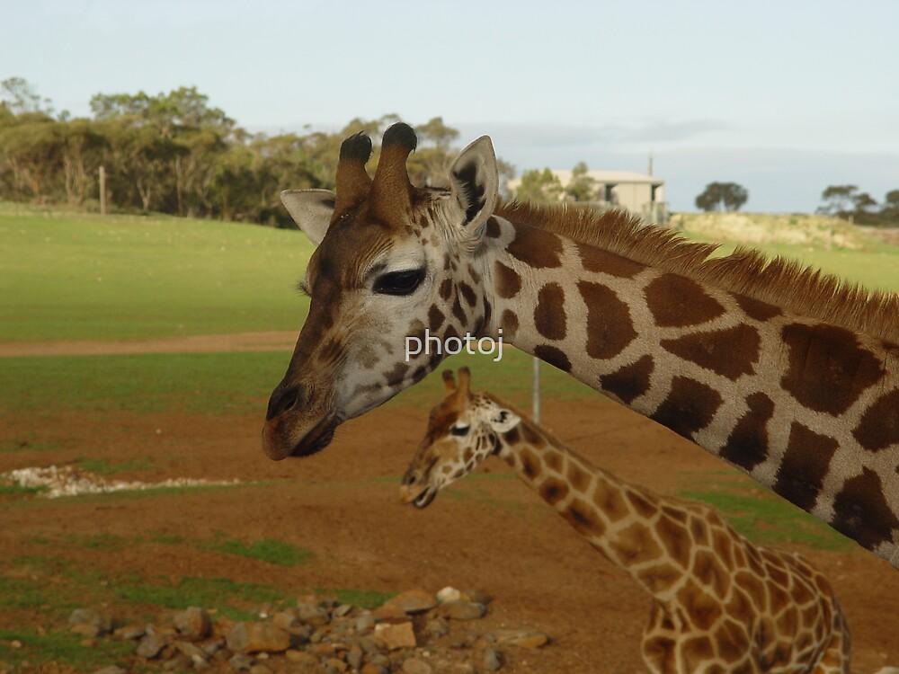 photoj animal S.A. Minartoo Zoo by photoj