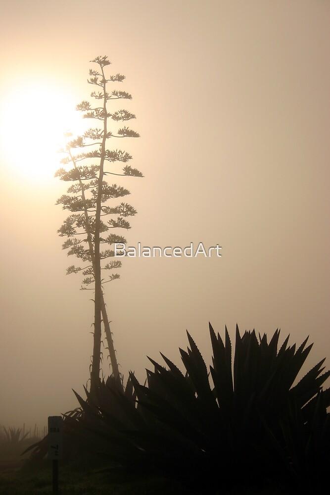 Morning Yucca by BalancedArt