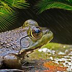 Frog in the Rain by TJ Baccari Photography