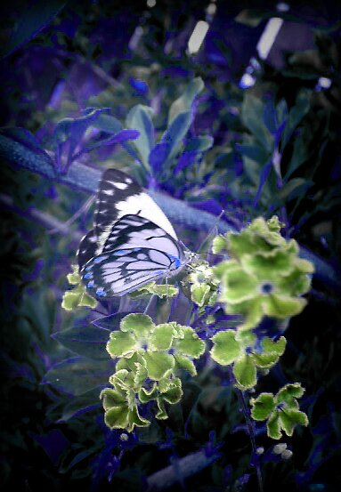 butterfly 2 by kristy  kenning