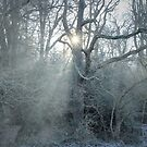 Winter by Ursula Rodgers Photography