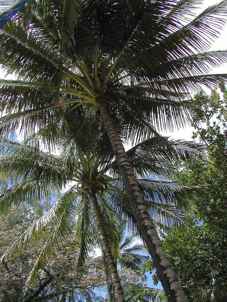 CLASSIC PALM HAWAII by sky2007
