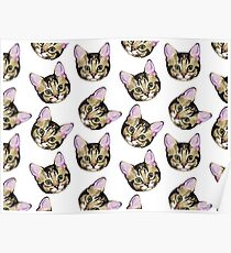 Cat Pattern Poster
