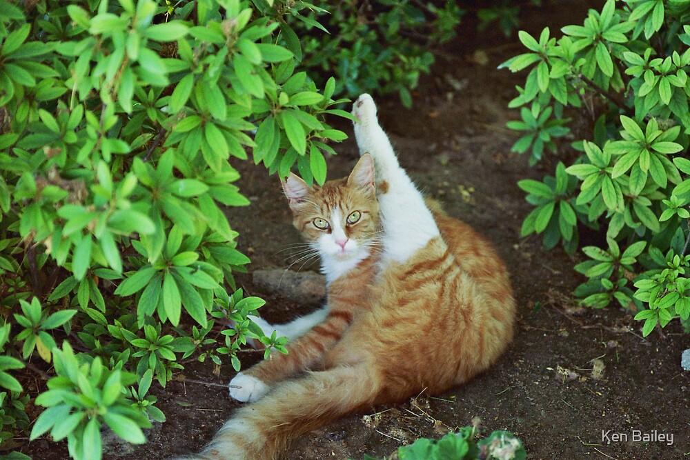 CAT YOGA by Ken Bailey