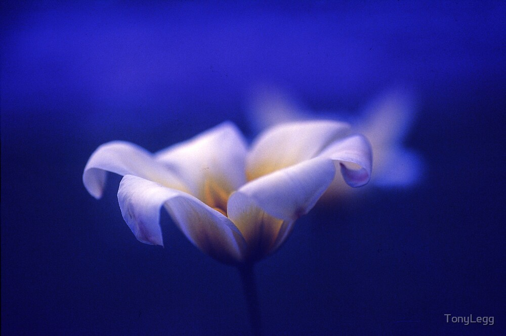 Tranquility in blue by TonyLegg
