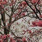 Tulip Tree by Tracey Hampton