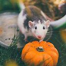 Halloween Rat by Indea Vanmerllin