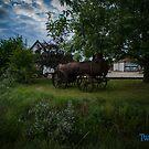 Rust in Nature by Steven Gayler Twenty Seven Imagery