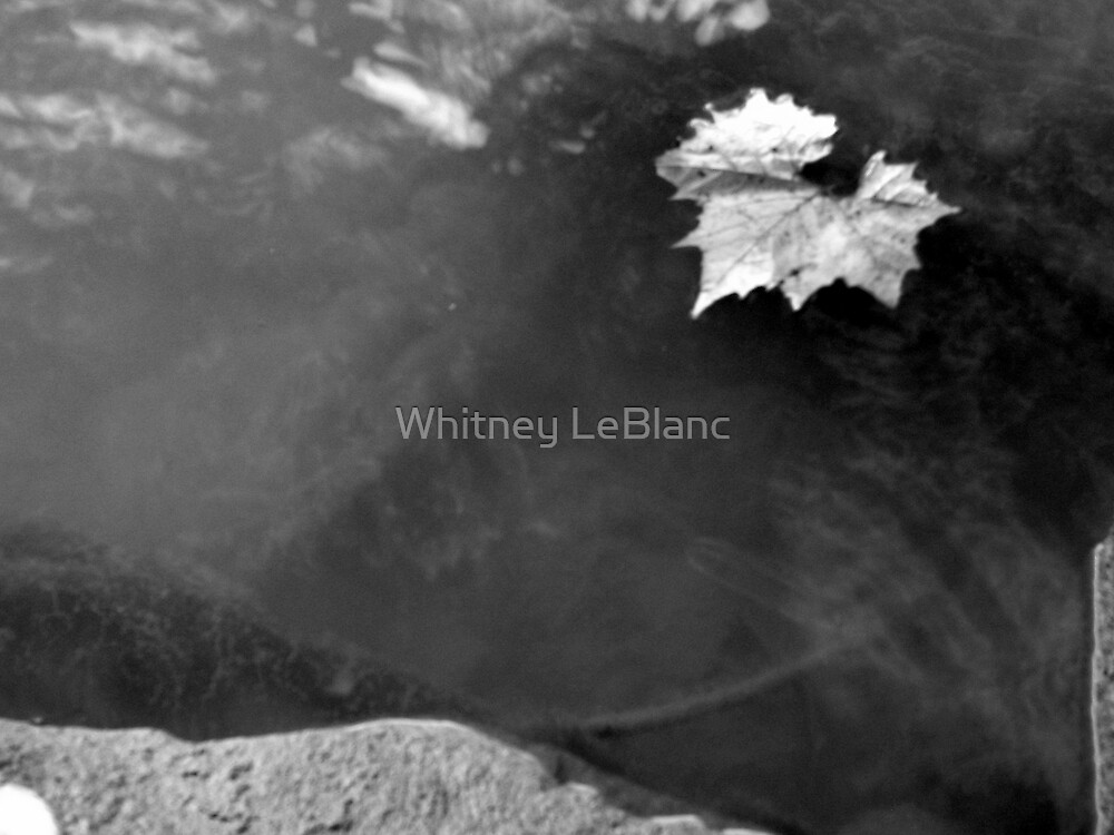 LEAF IN THE WATER by Whitney LeBlanc