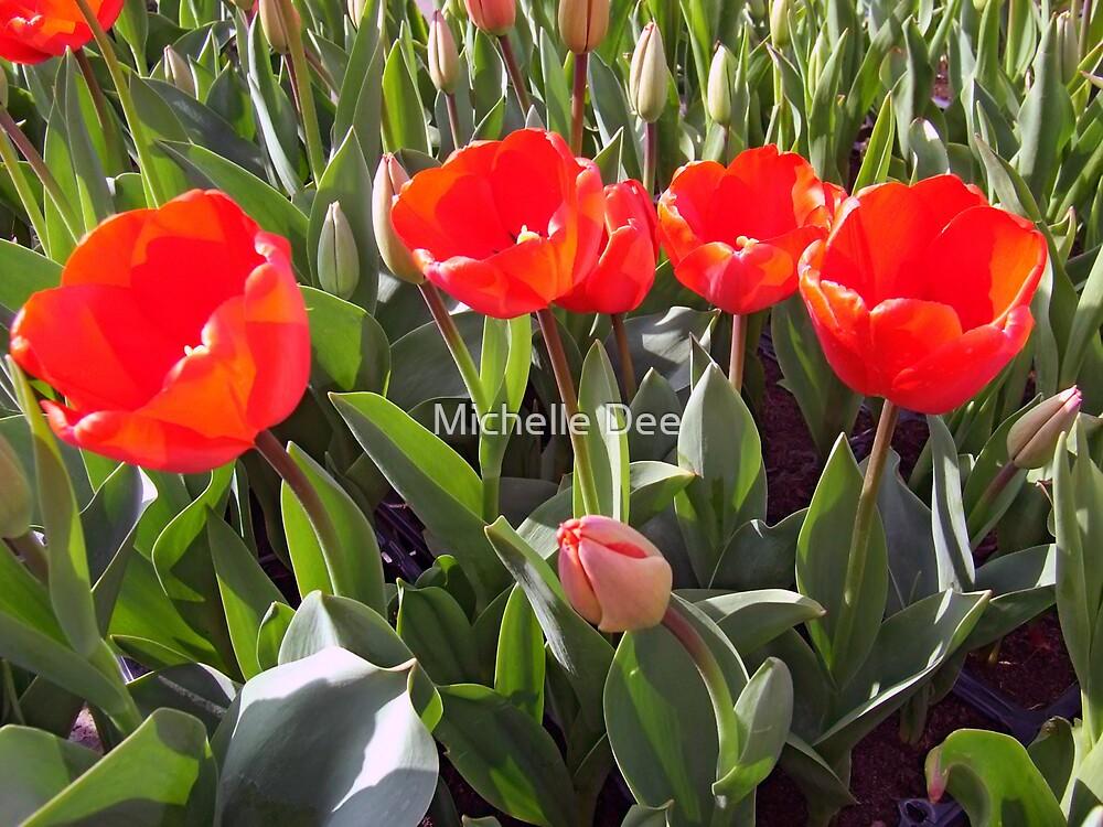 Red Tulips by michelleduerden