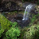 Tarraleah Falls, Tasmania by Jim Lovell