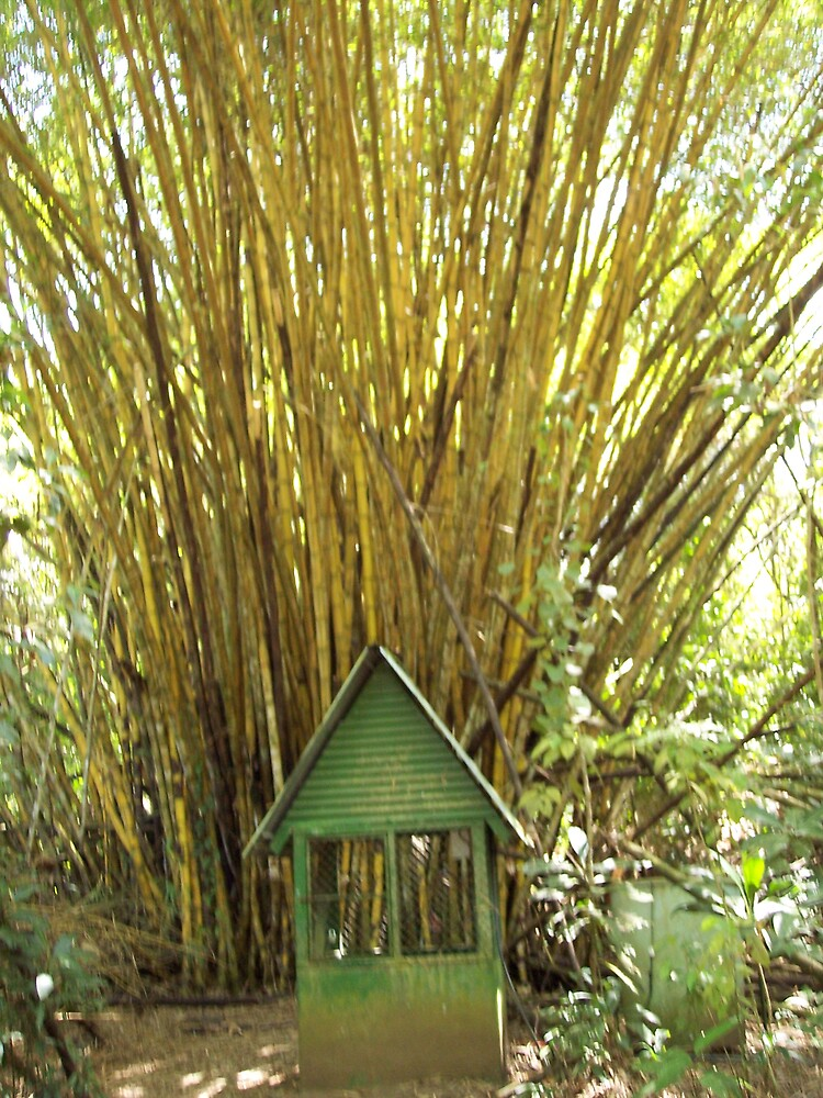 Bamboo House by pooksbabe
