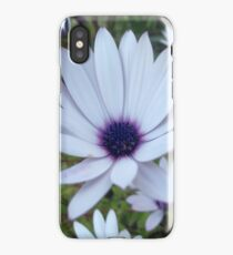 White Osteospermum Flower Daisy With Purple Hue iPhone Case