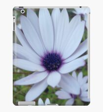 White Osteospermum Flower Daisy With Purple Hue iPad Case/Skin