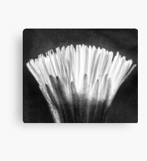 The Fragile Blooming (Xray flower in black white) Canvas Print