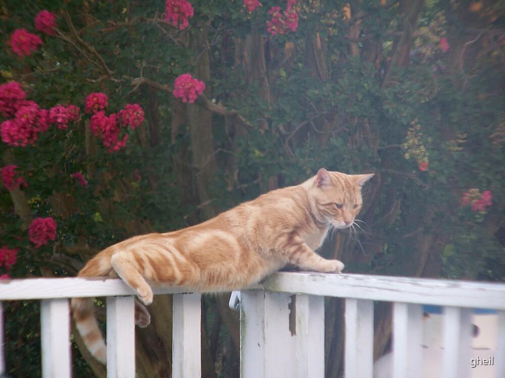 Daddy cat on watch by gheil