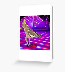 Cockatiel Stripper Greeting Card
