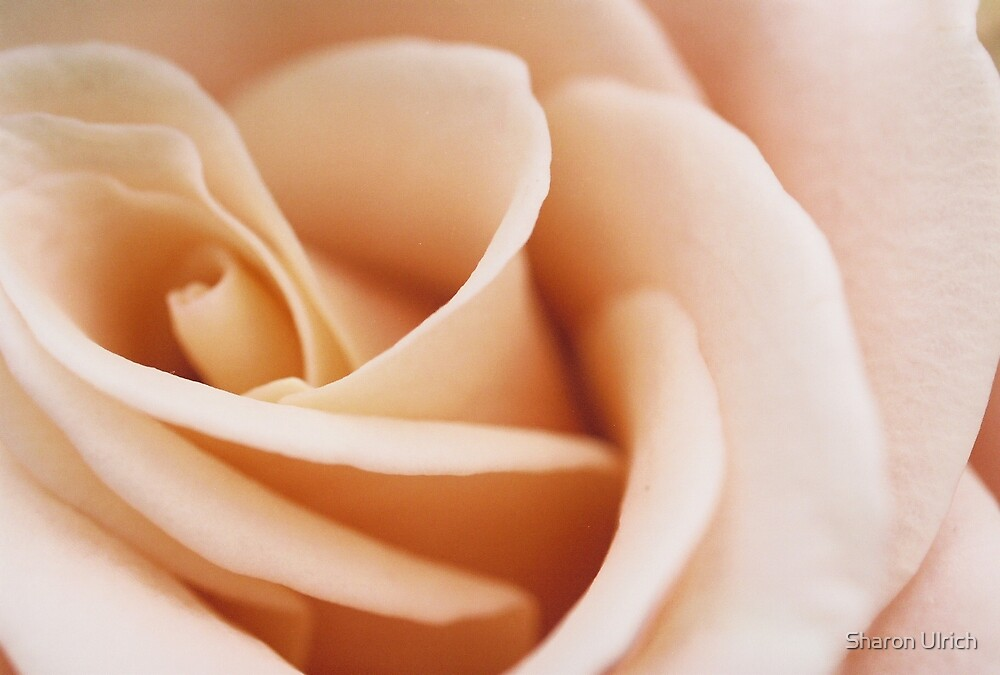 A Rose By Any Other Name by Sharon Ulrich